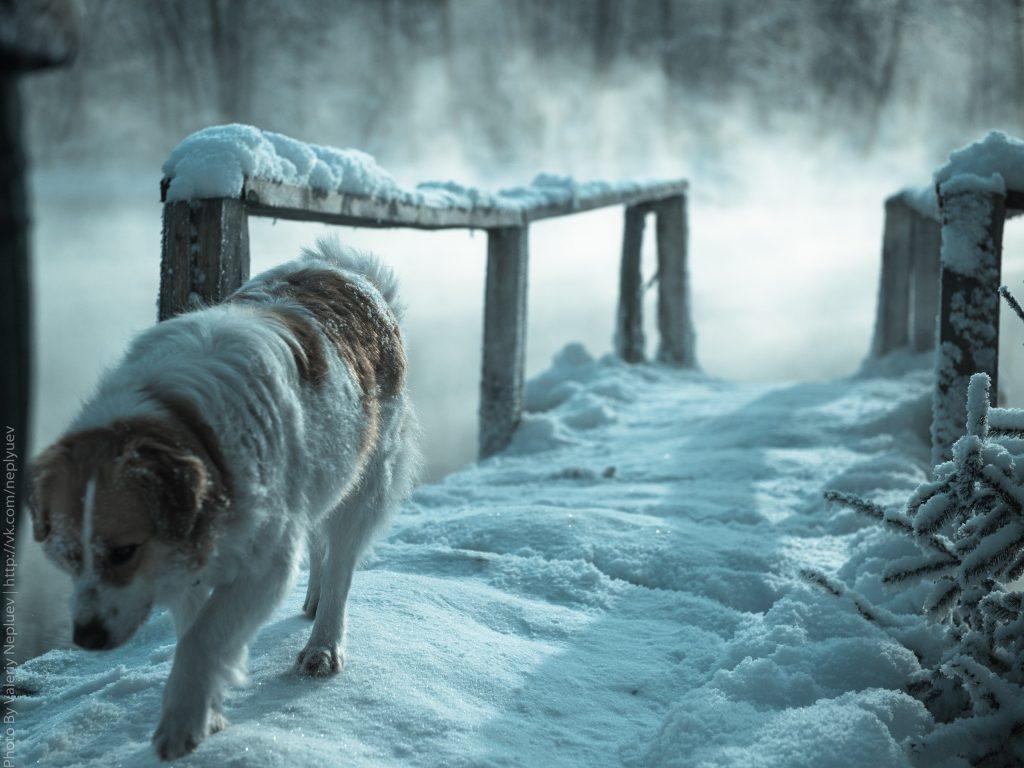 собака у голубых озер